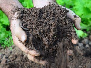Panorama Agrícola traz informações de como cuidar do solo, o armazém da água