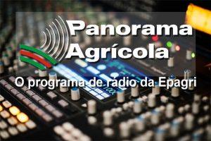 O sucesso da cooperativa de mulheres em São Ludgero