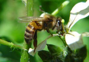 Acidentes com abelhas podem aumentar no verão: saiba o que fazer