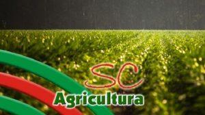 TV da Epagri: Rizicultura, agroindústria, energia solar e calda sulfocálcica são destaques