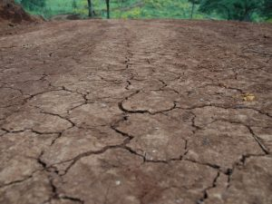Read more about the article Secretaria da Agricultura acompanha impactos da estiagem em SC