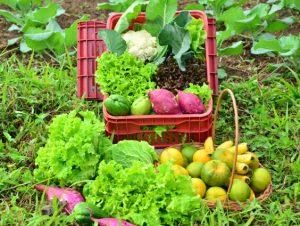 Read more about the article Epagri promove capacitação on-line sobre agroecologia na terça-feira, 13