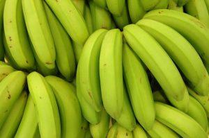 Epagri doa biomassa de banana verde para melhorar a imunidade de idosos em Itajaí