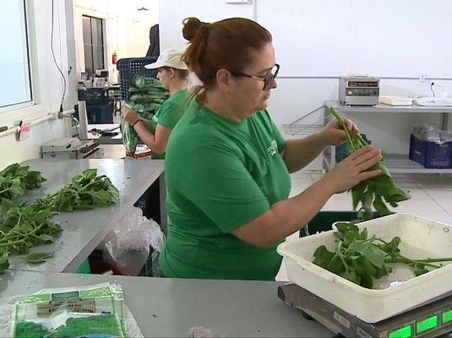 Cooperativa de orgânicos faz sucesso na Grande Florianópolis