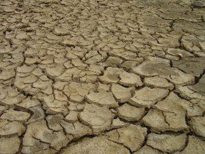 Relatório da Epagri reúne impactos da estiagem e da pandemia no agronegócio catarinense
