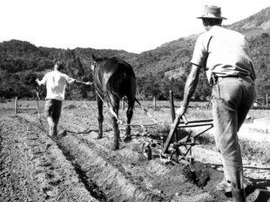 Epagri lança livro sobre a história da extensão rural no Brasil e em SC