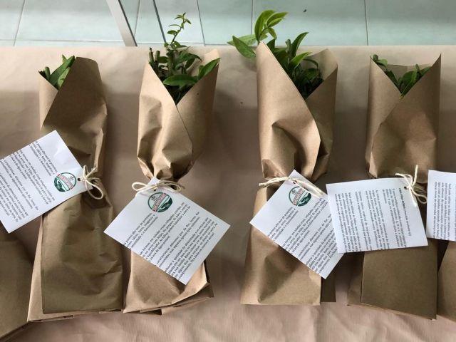 Epagri inclui ora-pro-nóbis em cestas básicas oferecidas a famílias em situação de fome