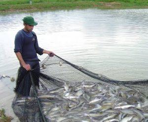 Epagri/Ciram realiza cursos on-line sobre outorga de direito de uso da água
