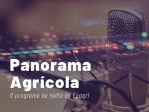 Jovens rurais, Semana da Alimentação e lançamento de azevém são destaques no Panorama Agrícola
