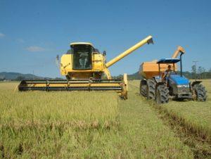 Read more about the article Secretaria da Agricultura e Epagri apresentam Plano Safra nesta segunda-feira