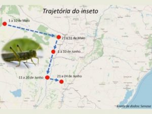 Governo do Estado monitora nuvem de gafanhotos na Argentina