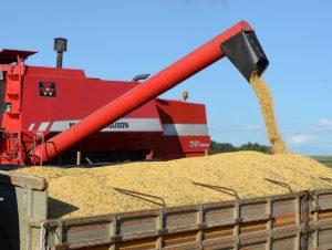 Agronegócio responde por 72% das exportações catarinenses no primeiro semestre de 2020