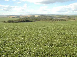 Exportações de soja e suínos e bons preços de arroz são destaques do Boletim Agropecuário de junho