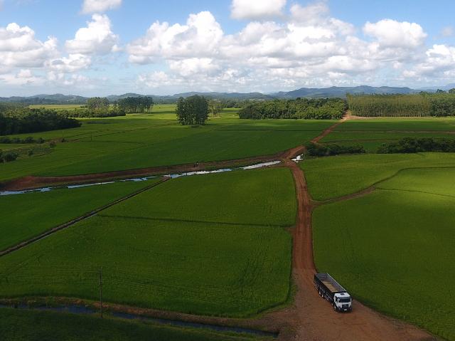 Epagri conclui mapeamento da área de arroz por imagens de satélite