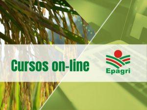 Read more about the article Cursos on-line: políticas públicas para a agricultura, doenças de citros, apicultura e muito mais na agenda da semana