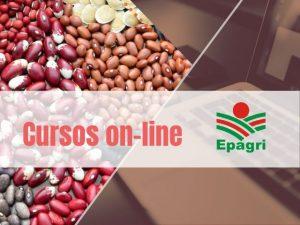 Cursos on-line: plantas de cobertura, mel na culinária, sementes crioulas e mais na programação de 13 a 17 de julho