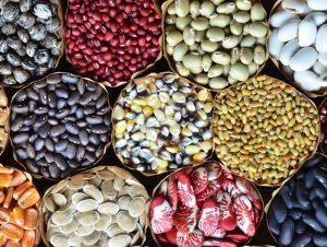 Read more about the article Chapecó terá feira de sementes crioulas neste domingo (26)