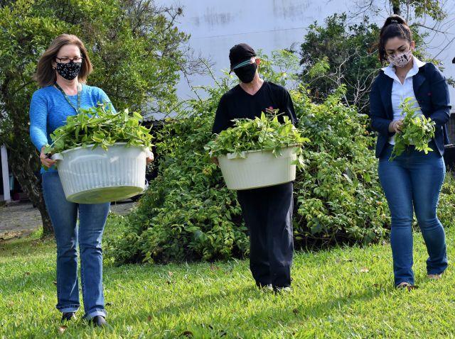 Epagri oferece oficina on-line sobre Plantas Alimentícias Não Convencionais (PANC) no dia 22