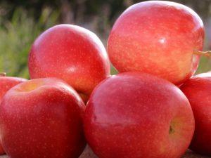 Preço da maçã e exportação de suínos em alta, aponta Boletim da Epagri/Cepa