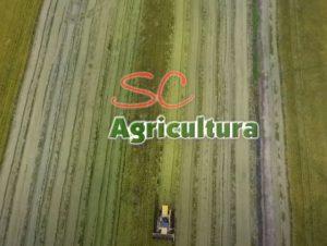 Read more about the article TV da Epagri: pecuária leiteira, piscicultura e cultivo protegido são os assuntos