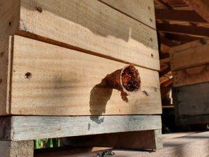 Abelhas sem ferrão: um mundo fascinante dentro de pequenas caixas