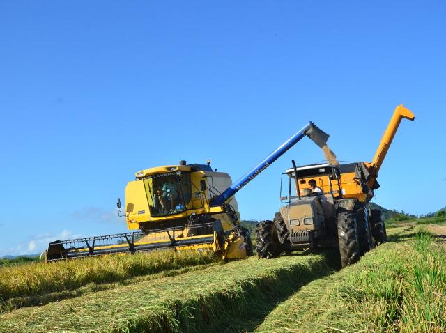 Preço do arroz: produtor catarinense não é o responsável, avalia Epagri/Cepa