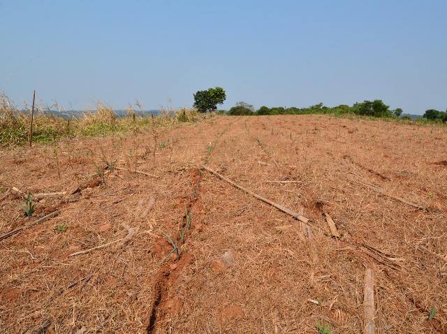 Artigo: Conservação do solo e reservação de água são estratégias para enfrentar estiagens*