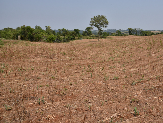 Secretaria da Agricultura e Epagri apresentam avaliação de impactos da estiagem na produção agropecuária