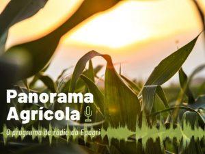 Read more about the article Produzir e preservar é possível: ouça no Panorama Agrícola desta semana