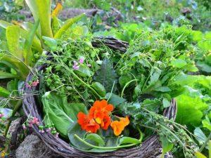 Read more about the article Evento discute Panc e agricultura urbana no dia 3 de fevereiro