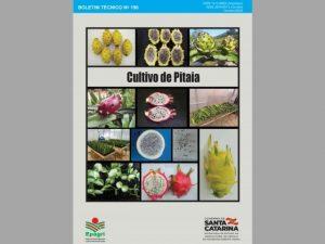 Read more about the article Epagri lança publicação técnica sobre cultivo de pitaia