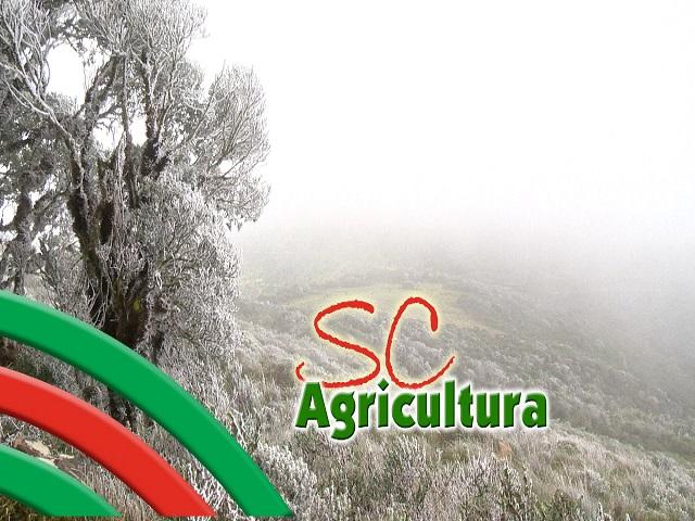 Read more about the article TV da Epagri fala de plantas bioativas, alimentação escolar e dicas culinárias