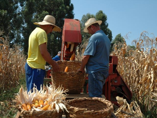Read more about the article Boletim agropecuário de julho: aumento nas exportações de carnes e queda na produção de milho