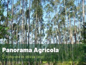 Read more about the article Rádio da Epagri fala sobre integração entre lavoura, pecuária e floresta