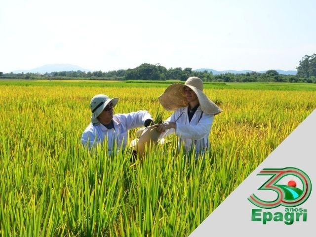 Read more about the article EPAGRI 30 ANOS: Unimos pesquisa agropecuária e extensão rural