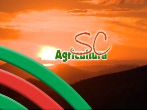 Read more about the article TV da Epagri: araucária, biofertilizante, agroindústrias e 30 anos da Epagri são os assuntos