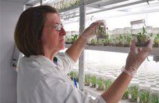 IMG-Laboratorio-cultivar
